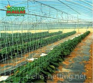 trellising inside in greenhouse