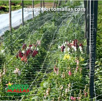 Row of ornamental flowers cultivated with trellis net